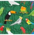 Seamless parrots birds pattern vector image