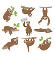 sloth cute baanimal sloths hanging on tree vector image vector image