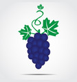 bunch of grapes with green leaves vector image