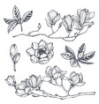 collection hand drawn magnolia flowers vector image vector image