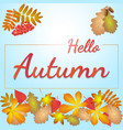 hello autumn with leaves vector image