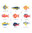 collection of sea and ocean fish and lettering vector image vector image