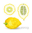 delicious exotic sour esrog fruit with rough skin vector image vector image