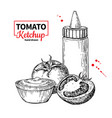 ketchup sauce bottle with tomatoes drawing vector image vector image