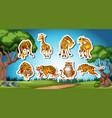 set of giraffe and tiger sticker vector image vector image