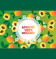 apricot fruit colorful circle copy space organic vector image