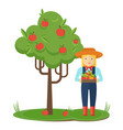 apple picking farmer woman in the garden with vector image vector image