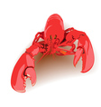 boiled lobster vector image vector image