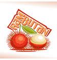 rambutan fruit vector image vector image