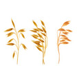 realistic oat ears with seads grains cereals set vector image vector image