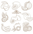 Set of Outline hand drawn fruits with leaves vector image vector image