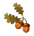 Acorn icon cartoon style