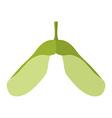 Flat samaramaple keyswhirlybirds or polynoses vector image vector image