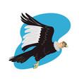 Condor in Flight vector image vector image