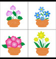 flowers in pots on white background vector image