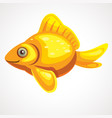 gold fish isolated on a white background vector image vector image