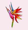 graphic colorful strelitzia exotic flower vector image vector image