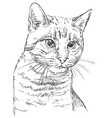 hand drawing cat 2 vector image vector image