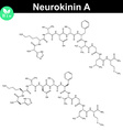 Neurokinin A chemical structure vector image vector image
