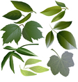Set of leaves of several flowers vector image vector image