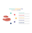 beef steak infographic template concept with five vector image vector image