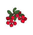 cranberry food delicious berries leaves vector image vector image