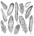 feathers sketch set hand drawn vector image vector image