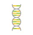 science genetic dna vector image vector image