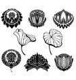 lotus collection vector image vector image