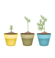 Three Green Dills in Terracotta Flower Pots vector image vector image