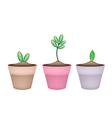 Fresh Green Trees in Terracotta Flower Pots vector image vector image