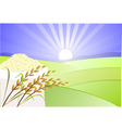 paddy and rice vector image