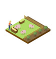 pigs breeding on ranch isometric 3d element vector image