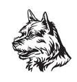 decorative portrait of dog norwich terrier vector image vector image