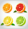 fresh citrus fruit halves orange grapefruit lemon vector image