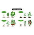 organic vegetables growing set vector image