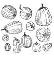 various pumpkins botanical hand drawn set vector image
