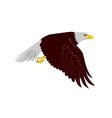 Bald Eagle Flying vector image vector image