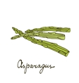 Colorful hand drawn card with asparagus vector image