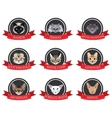 flat icons set of pedigreed cats with the names vector image