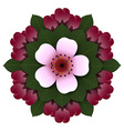 Floral rosette pink cherry flower vector image vector image