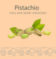 nuts and seeds collection vector image vector image