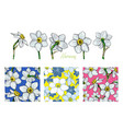 set of flowers narcissus with three different vector image vector image