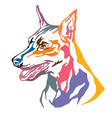 colorful decorative portrait of dog miniature vector image vector image