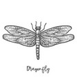 engraved dragonfly or flying insect sketch vector image