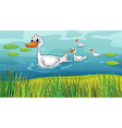 Little ducks following the mother duck vector image vector image