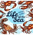 sea life poster of fish sketch ocean vector image vector image