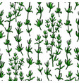 thyme drawing seamless pattern isolated vector image