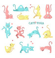 Cats doing yoga poses