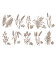 cereal plant grain and seed isolated sketches vector image vector image